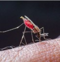 Health Issues India | Could a malaria treatment be found in human blood?
